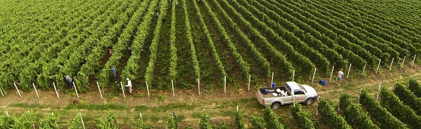Producere vin Domeniile Lungu